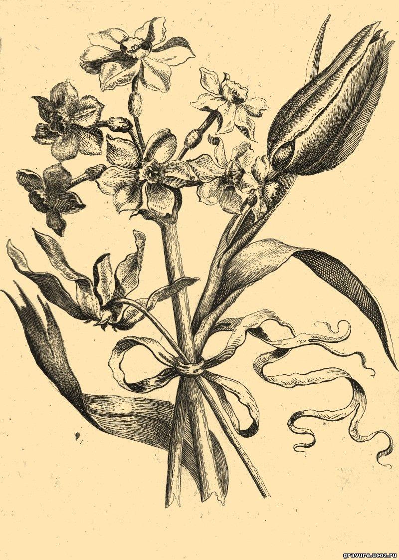 Гравюра цветы